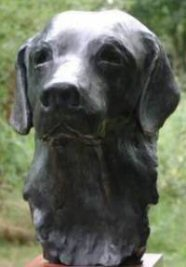 Bronze bust of male labrador - click for larger view