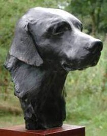 Bronze bust of a labrador by animal sculptor Laury Dizengremel