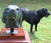 Bronze bust of female labrador - click for larger view
